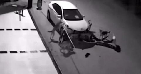 Quyết tâm truy sát mèo, đàn chó hoang phá nát chiếc ô tô ven đường