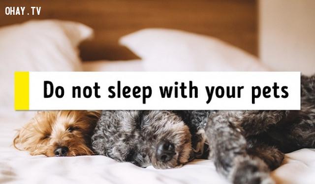 6. Không ngủ cùng thú cưng,mẹo sức khỏe,chữa mất ngủ,trị mất ngủ