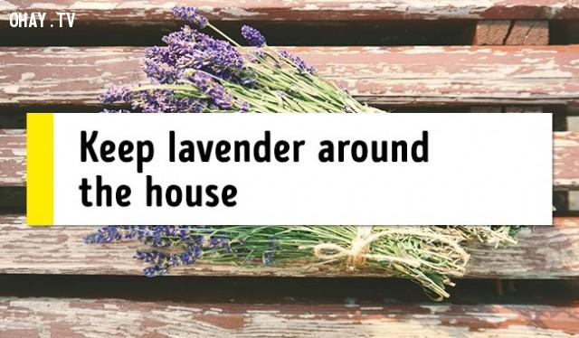 9. Đặt hoa oải hương xung quanh nhà,mẹo sức khỏe,chữa mất ngủ,trị mất ngủ