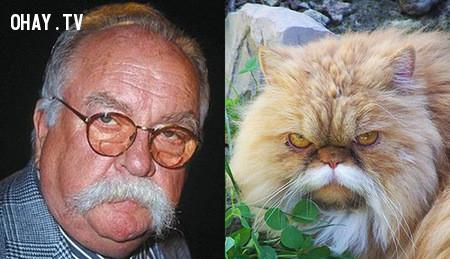 Wilfred Brimley và chú mèo này,