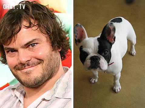Jack Black và chó Bulldog Pháp ,
