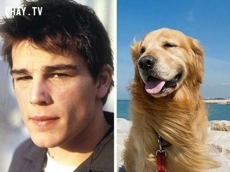 Josh Hartnett và loài chó Golden Retriever,