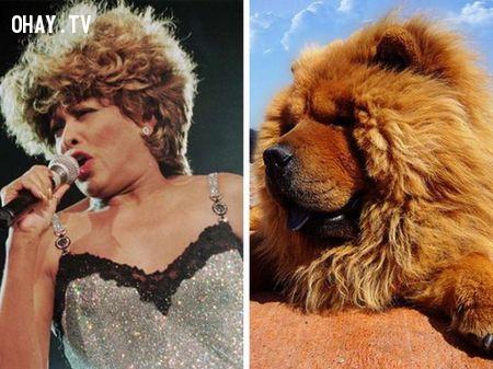 Tina Turner và chó Chow Chow,