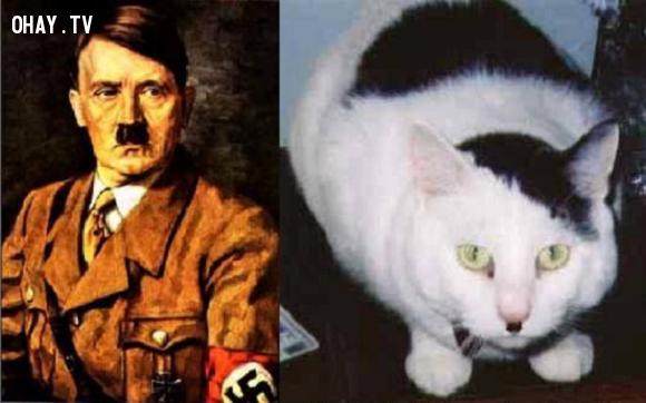 Mèo Hitler,