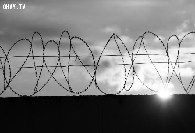 3. Rối loạn nhân cách ranh giới Borderline,rối loạn nhân cách,tâm lý học