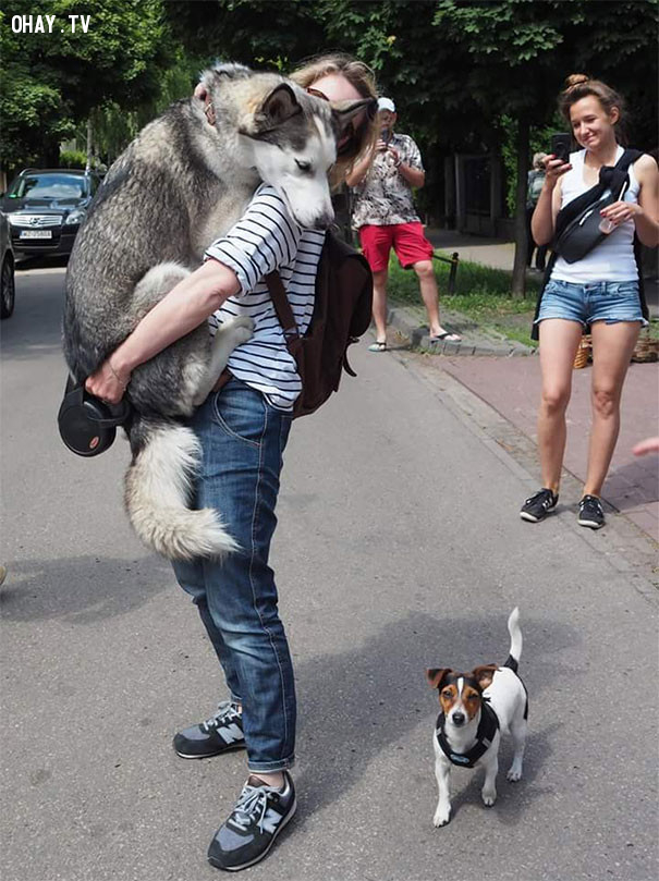 3. Một chú chó nhỏ cũng đủ làm em hoảng sợ.,động vật hài hước,cún cưng