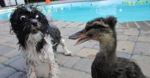 10+ khoảnh khắc những chú chó không sợ trời, không sợ đất, còn lại sợ tất