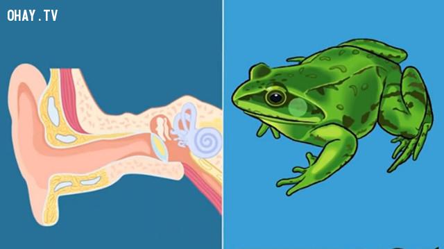 Điểm giống nhau kỳ lạ giữa con người và động vật