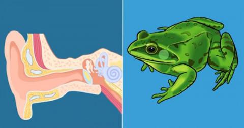 Những điểm giống nhau thú vị giữa con người và động vật