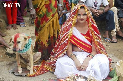 Kết hôn với chó????,điều luật kỳ lạ,những điều thú vị trong cuộc sống