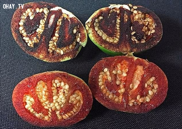 Cà chua 'chảy máu' khi cắt ra, có tên khoa học Solanum ossicruentum.,thế giới động vật