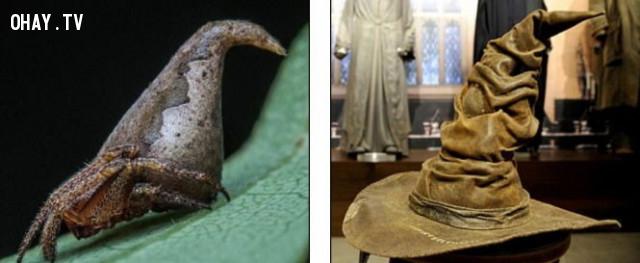 Loài nhện kỳ lạ có bề ngoài giống chiếc nón phù thủy trong Harry Porter được tìm thấy ở Ấn Độ.,thế giới động vật