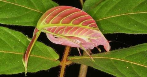 10 loài mới phát hiện ấn tượng nhất 2017