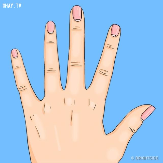 Lunulae nhỏ,liềm móng tay,Lunulae