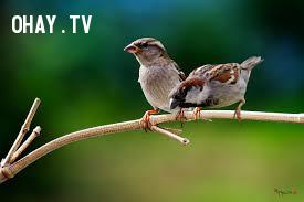 [Tục ngữ] Chim khôn tiếc lông, người khôn tiếc lời.,