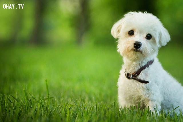 Bạn đời muốn một chú chó và bạn không muốn gây ra một trận cãi nhau,