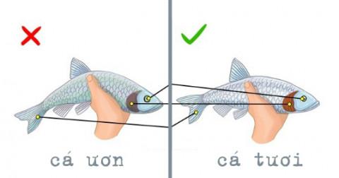 Một vài cách giúp bạn mua được cá tươi, ngon.