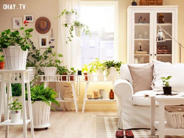 2. Trồng cây xanh,mùa hè,dọn dẹp nhà cửa
