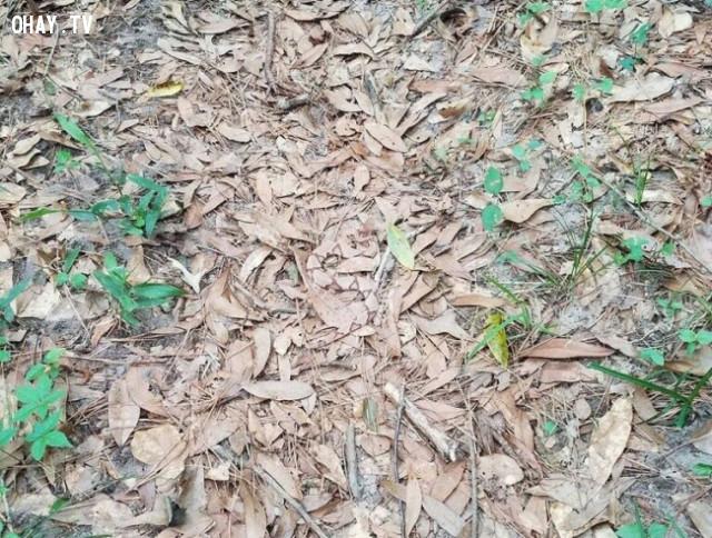 1. Hãy tìm một chú rắn ẩn nấp đâu đây.,thử tài tinh mắt