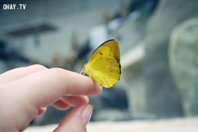 Có một con bươm bướm màu vàng đang bay tới, nếu bạn là con bướm này bạn sẽ đậu trên bông hoa nào?