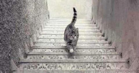Con mèo này đang đi lên hay đi xuống?