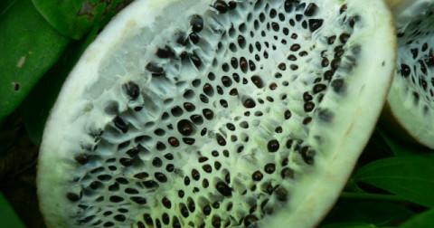 Những loại hoa quả kỳ lạ nhất thế giới
