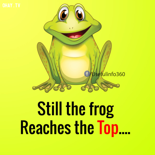 Nhưng chú ếch kia vẫn nhảy được lên ngọn cây...,suy nghĩ tiêu cực,suy nghĩ tích cực,cách sống tốt