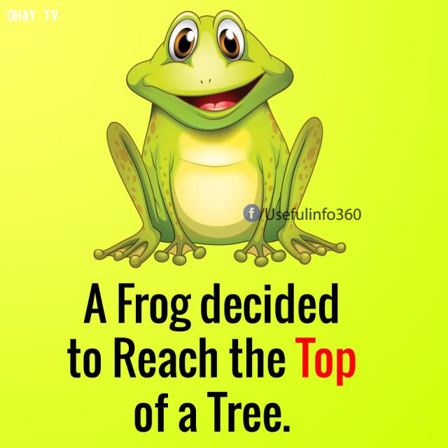 Có một chú ếch quyết định nhảy lên một ngọn cây.,suy nghĩ tiêu cực,suy nghĩ tích cực,cách sống tốt