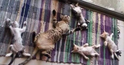 Chùm ảnh chứng minh 'mèo và nắng là đôi bạn không thể tách rời '