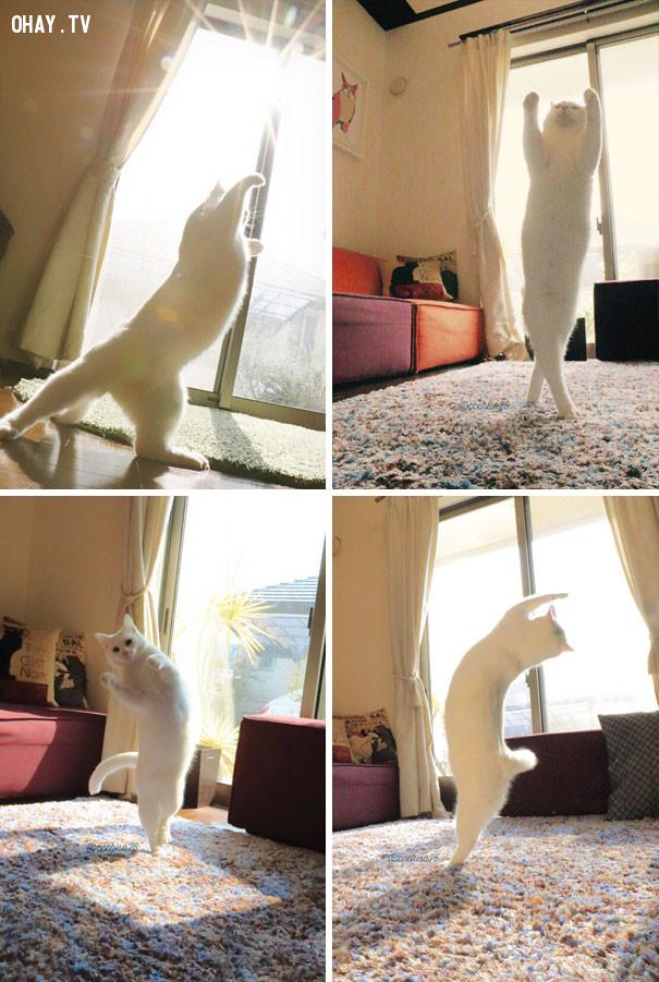 2. Vũ điệu dưới nắng.,mèo sưởi nắng,mèo hài hước,thú cưng
