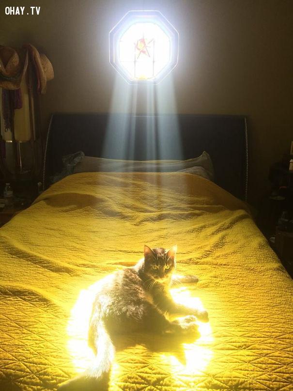 3. Việc của nắng là chói chang, việc của em là chói ké.,mèo sưởi nắng,mèo hài hước,thú cưng