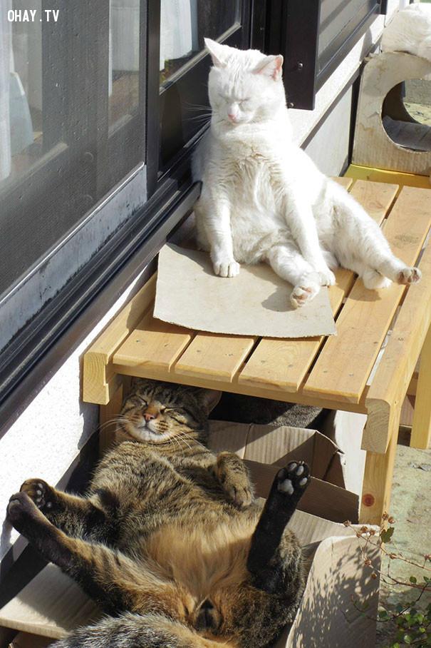 5. Em chỉ cần nắng chứ chả cần hình tượng!,mèo sưởi nắng,mèo hài hước,thú cưng