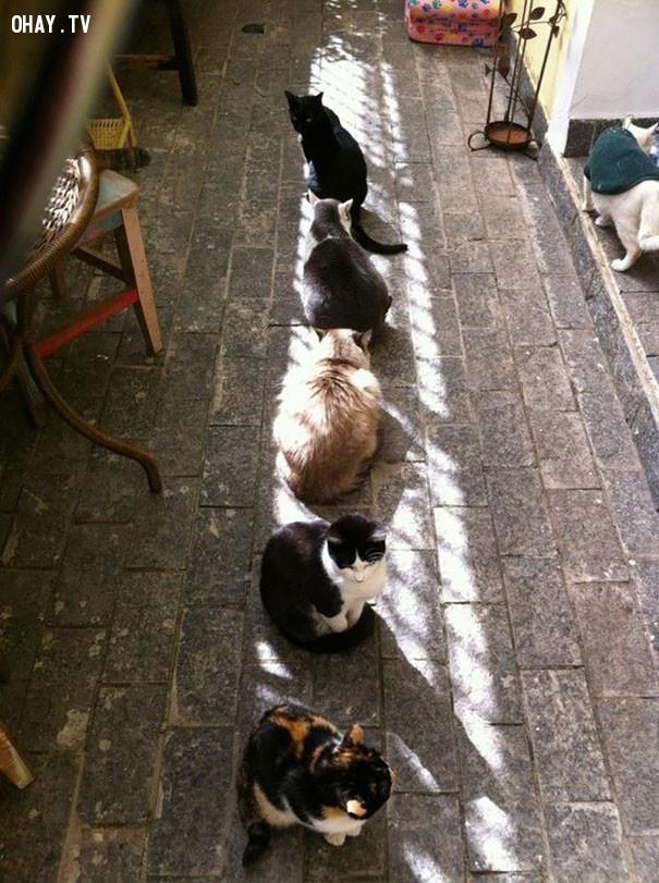 11. Tắm nắng cũng phải xếp hàng đấy nhé!,mèo sưởi nắng,mèo hài hước,thú cưng