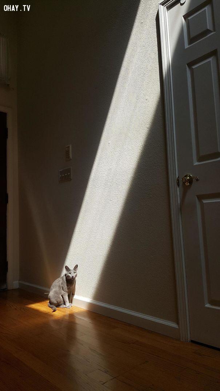 6. Xuân này vẫn giống xuân xưa, vẫn ngồi một góc vẫn chưa có bồ.,mèo sưởi nắng,mèo hài hước,thú cưng