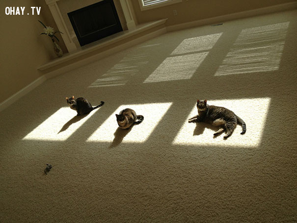 10. Nắng ở đâu, em ở đó.,mèo sưởi nắng,mèo hài hước,thú cưng