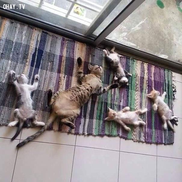 1. Nhìn là biết mẹ con rồi!,mèo sưởi nắng,mèo hài hước,thú cưng