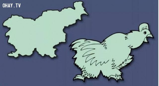 42. Slovenia - Có hình một con gà ,bản đồ,châu âu,bí quyết ghi nhớ