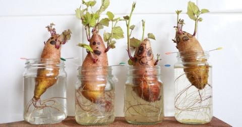 Hô biến rau củ quả thành cây cảnh - ý tưởng độc đáo mang lại cho bạn một ngày mới hứng khởi