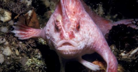 12 con vật kỳ lạ có thể bạn chưa bao giờ thấy chúng trước đây
