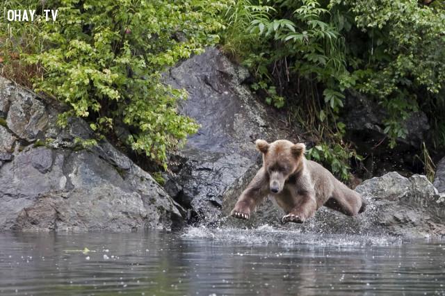 Mấy sư phụ kiếm hiệp vô mà xem nè! Em béo ú mà lướt nước êm ru vậy đó!!,ảnh khoảnh khắc,khoảnh khắc hài hước