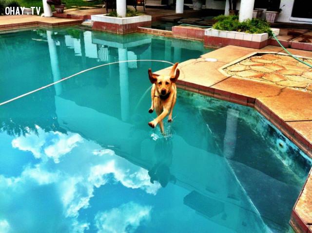 Khi chú cún nhà ta đạt đến cảnh giới của sự không thể.,ảnh khoảnh khắc,khoảnh khắc hài hước