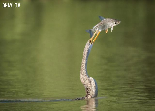 Tôi đang nhìn cái gì đây? Chim bơi, cá bay ư???,ảnh khoảnh khắc,khoảnh khắc hài hước