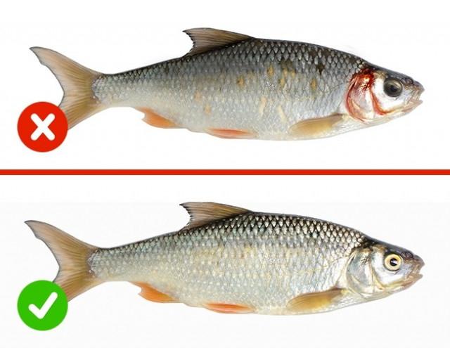 5. Cá,chất lượng thực phẩm,mẹo nhà bếp,mẹo nội trợ