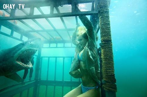 Sara Paxton, Katharine McPhee và Alyssa Diaz trong Shark Night (2011),
