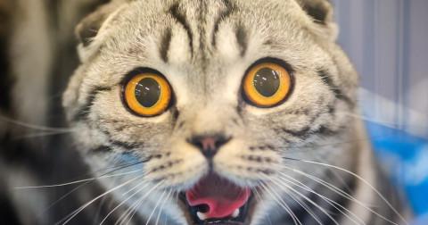 16 Điều chứng tỏ mèo là một người bạn tuyệt vời
