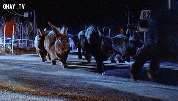 Night of the Lepus - Thỏ,phim kinh dị,ám ảnh kinh hoàng,ma quỷ