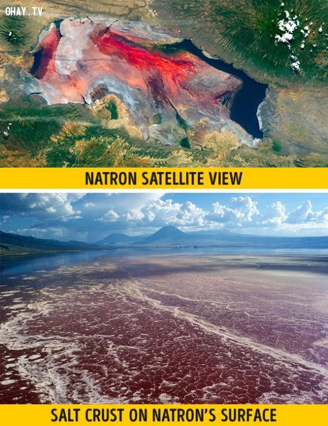 Hồ Natron, Tanzania,vẻ đẹp chết người,vùng nguy hiểm