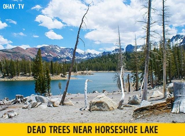 Hồ Horseshoe Lake, Mỹ,vẻ đẹp chết người,vùng nguy hiểm