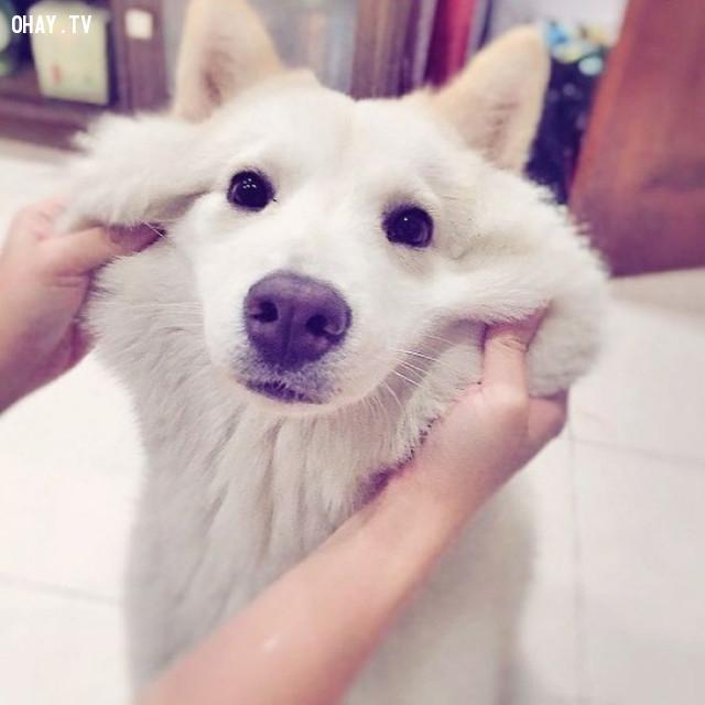 Em không bày tỏ cảm xúc đâu ,động vật dễ thương,cún cưng