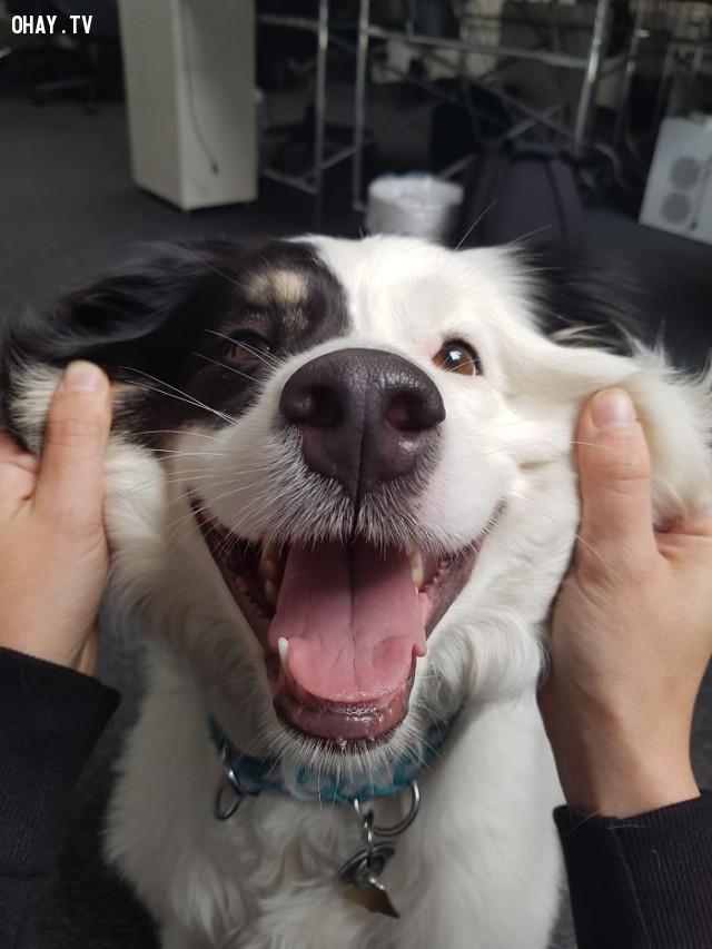 ,động vật dễ thương,cún cưng